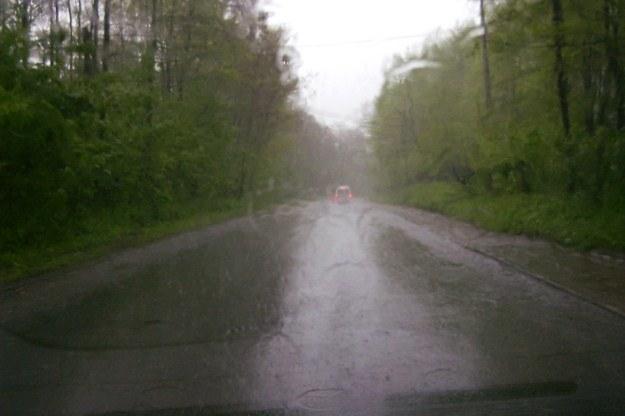 W czasie burzy w lesie lepiej nie stawać /INTERIA.PL