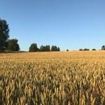 W czterech województwach wciąż jest sucho