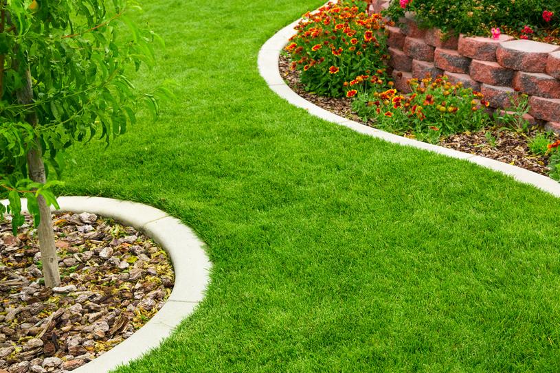 W drugiej dekadzie września wysiewamy trawnik lub układamy go z rolki /123RF/PICSEL