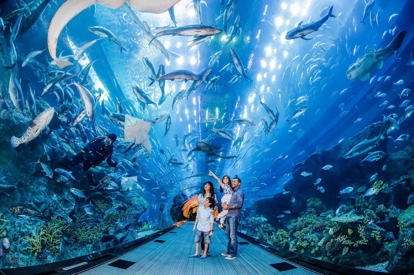 W Dubaju znajduje się największe na świecie centrum handlowe, w którym mieści się m.in. gigantyczne akwarium /materiały prasowe