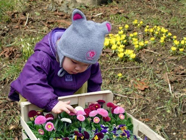 W dwunastu tyskich przedszkolach powstaną ogródki, którymi będą się opiekować dzieci /© Panthermedia