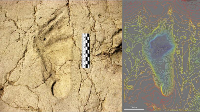 W Etopii znaleziono ślady stóp liczące 700 000 lat /materiały prasowe
