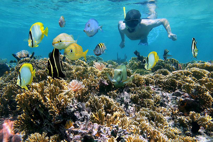 W głębsze części rafy dociera bardzo niewiele światła. Bez latarki podwodne rośliny mienią się tylko odcieniami błękitu /123RF/PICSEL