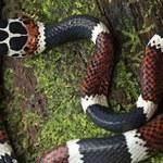 W Hondurasie odkryto mnóstwo nowych gatunków zwierząt