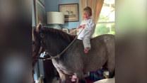 W ich domu częstym gościem jest... koń. Dasz wiarę?
