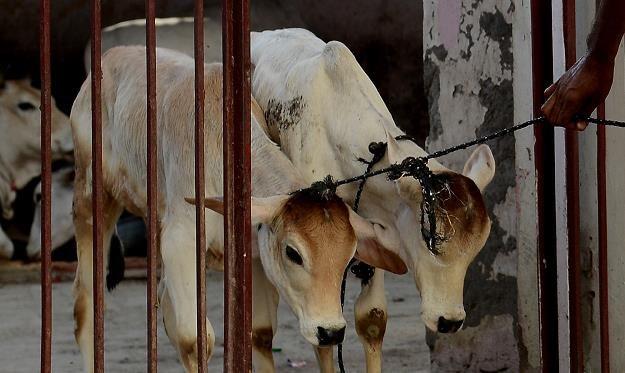 W Indiach przybiera na sile konflikt między wegetarianami a mięsożercami /AFP