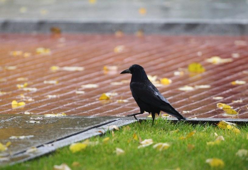W inowrocławskim parku znaleziono prawie pół tysiąca martwych ptaków /STANISLAW KOWALCZUK /East News