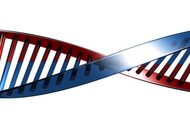 W internecie jest znacznie więcej miejsca na dane z DNA (Fot. Flavio Takemoto) /stock.xchng