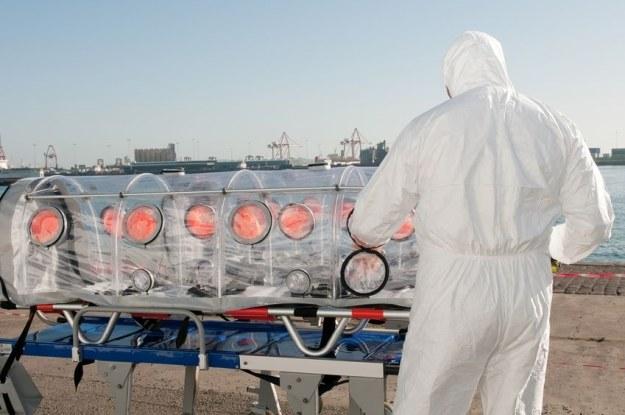 W Kazachstanie wciąż odnotowuje się przypadki zachorować na dżumę /123RF/PICSEL