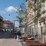 W Krakowie na ul. Krakowskiej pojawiły się kolejne drzewa
