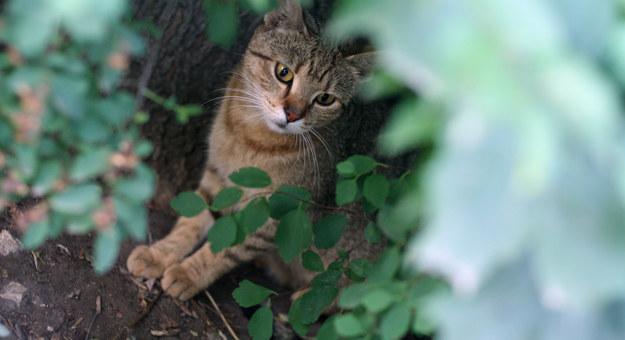 W Krakowie policzono wolno żyjące koty