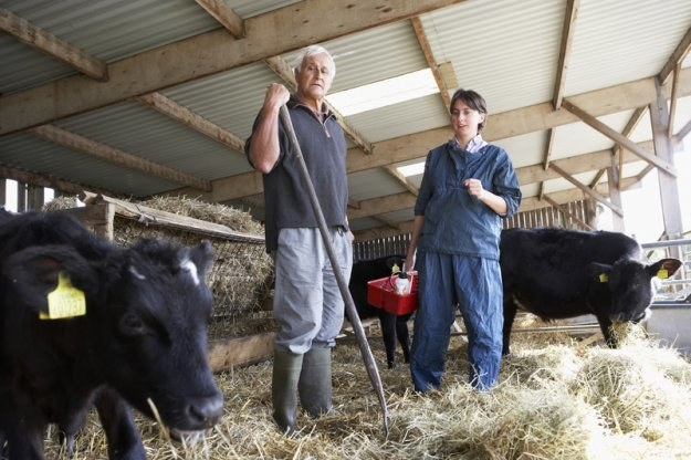 W KRUS ubezpieczonych jest 1,5 mln rolników /© Panthermedia