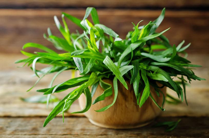 W kulinariach cenione są szczególnie liście estragonu /123RF/PICSEL