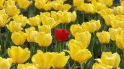 W kwitnącym ogrodzie Europy