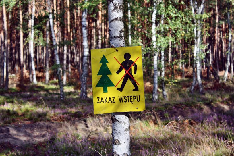 W lasach często pojawiają się ostrzeżenia. Nie lekceważ ich /123RF/PICSEL