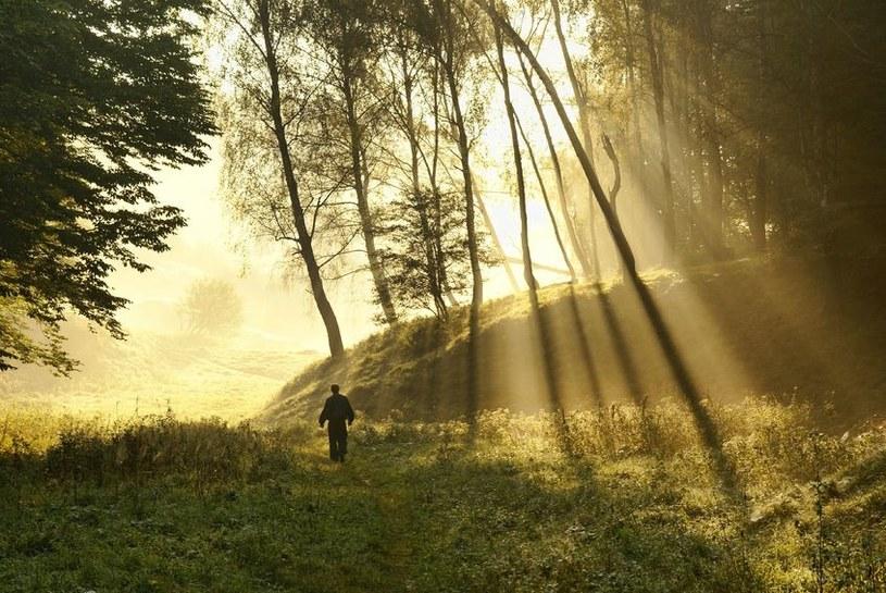 W lasach obowiązuje najwyższy stopień zagrożenia pożarowego /123RF/PICSEL
