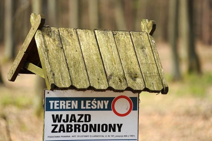 W Lasach Państwowych posadzono w tym roku 0,5 mld drzew /Wojciech Stróżyk /Reporter
