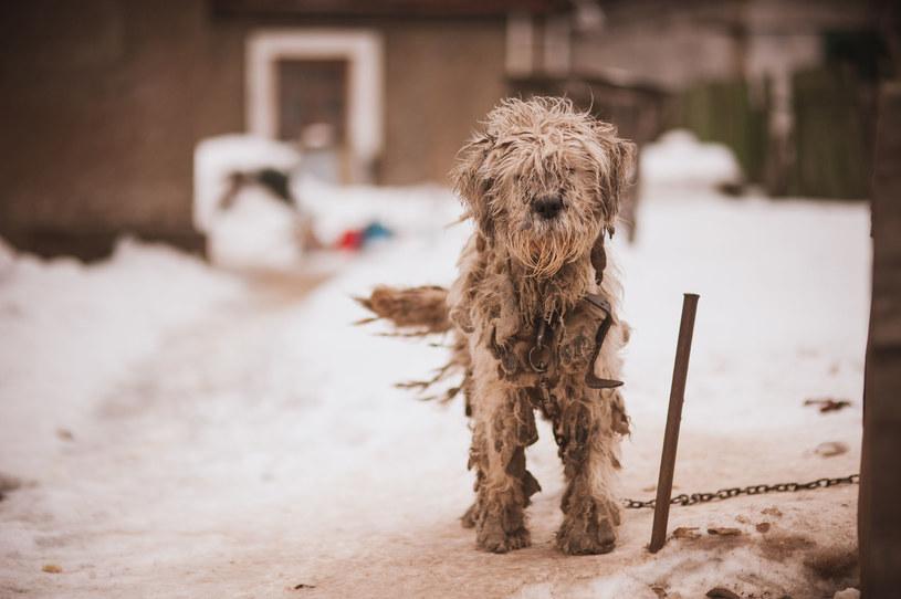 W łatwy sposób możesz pomóc zwierzakom w schroniskach w całej Polsce. /123RF/PICSEL
