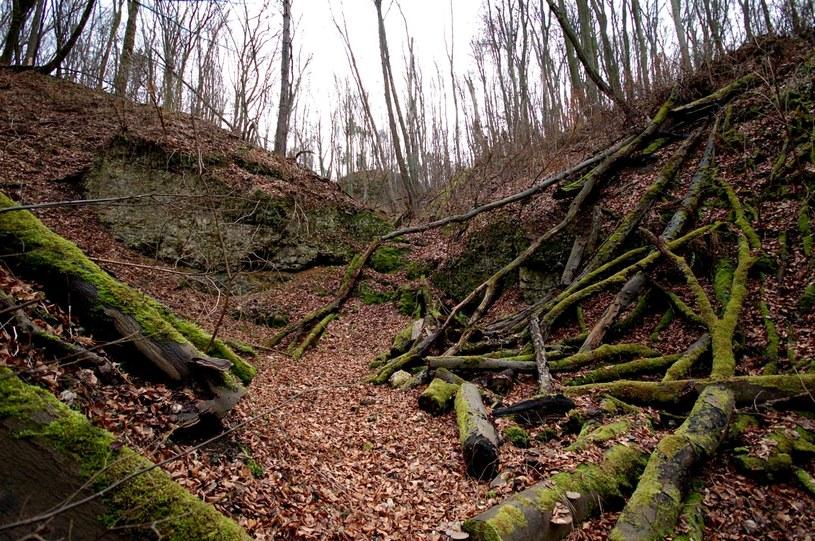 W lesie na uwagę zasługuje nie tylko roślinność, ale i ukształtowanie terenu /archiwum prywatne