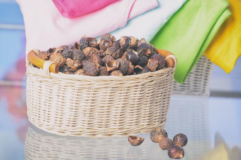W łupinach orzechów znajduje się saponina, czyli związek chemiczny pozyskiwany z roślin /123RF/PICSEL