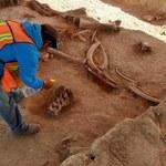 W Meksyku znaleziono mnóstwo kości mamutów