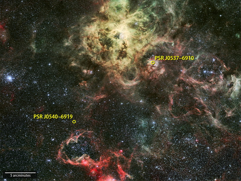 W Mgławicy Tarantula są dwa pulsary - sygnał z jednego z nich dotarł na Ziemię /NASA