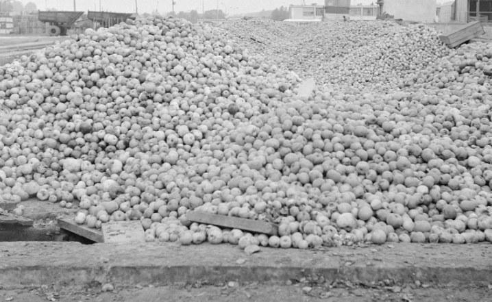 W miastach brakowało jabłek, które gniły u rolników /Z archiwum Narodowego Archiwum Cyfrowego