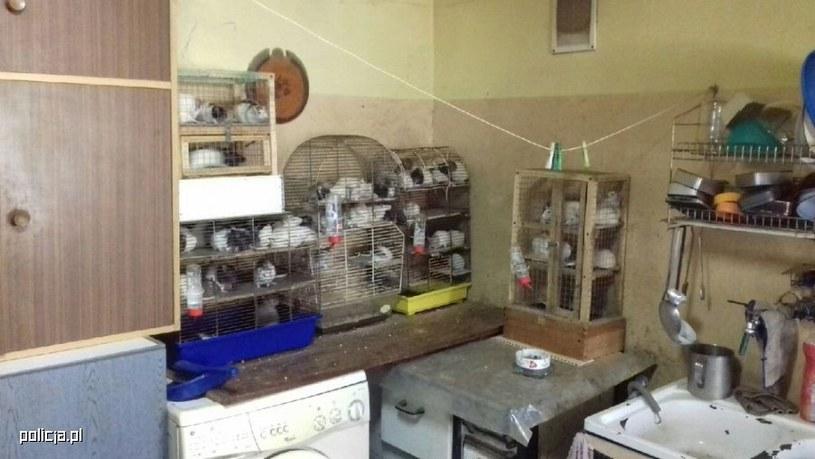 W mieszkaniu znajdowało się 131 szczurów /Policja