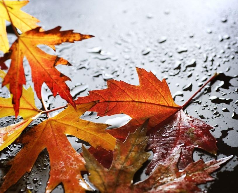 W najbliższych dniach będzie sporo deszczu /123RF/PICSEL