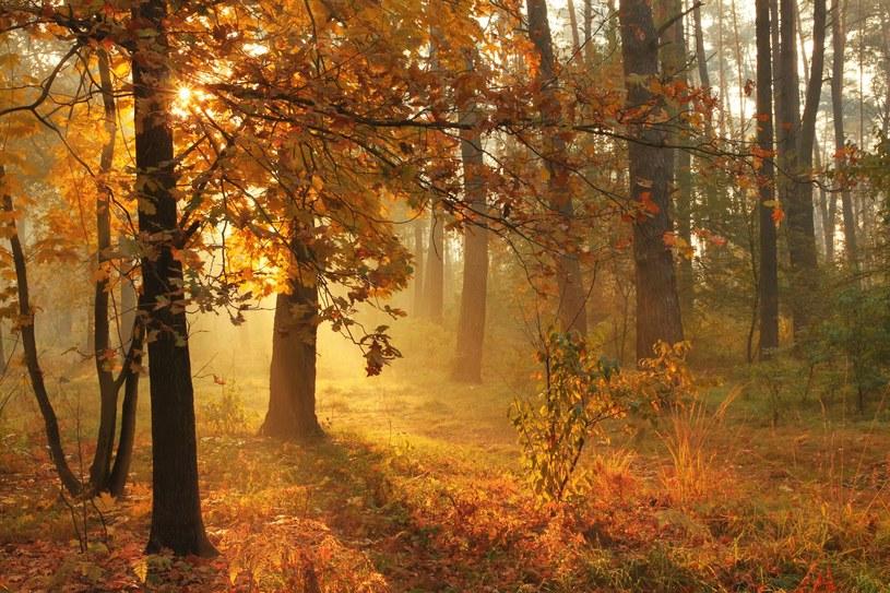 W najbliższych dniach można spodziewać się dużo słońca / Anton Petrus /123RF/PICSEL