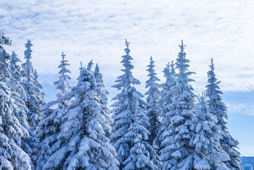 W najbliższym czasie pogoda będzie łaskawa dla narciarzy /123RF/PICSEL