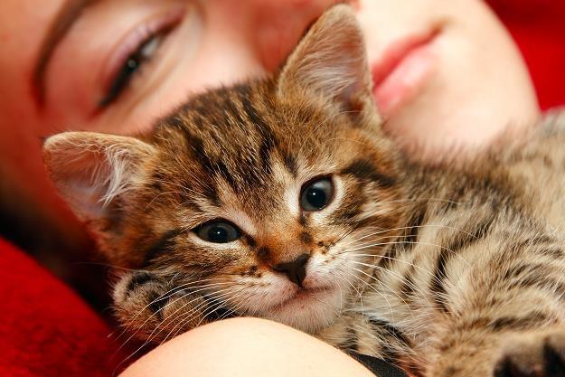 W niedzielę 17 lutego przypada międzynarodowy dzień kota /©123RF/PICSEL