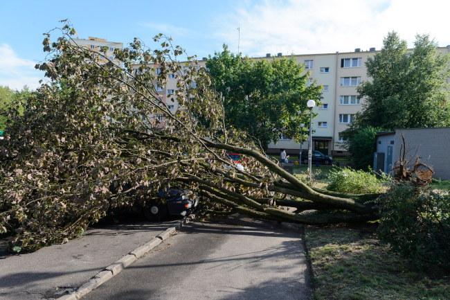 W niedzielę nad Polską przetoczyły się burze i nawałnice /Jakub Kaczmarczyk /PAP