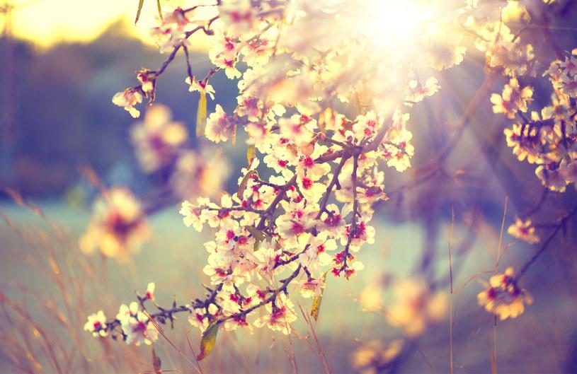 W niedzielę początek astronomicznej wiosny /123RF/PICSEL