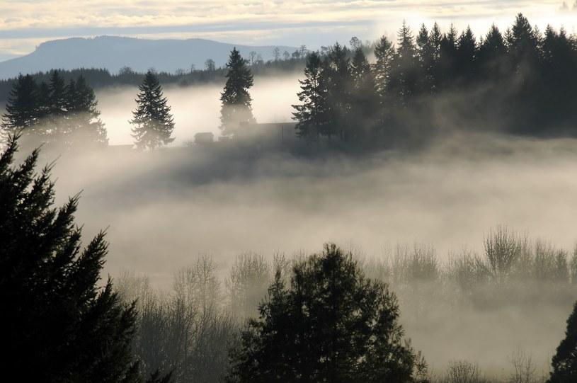 W nocy i jutro będzie bardzo mgliście. /123RF/PICSEL
