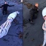 W Nowej Zelandii znaleziono ciało kałamarnicy olbrzymiej