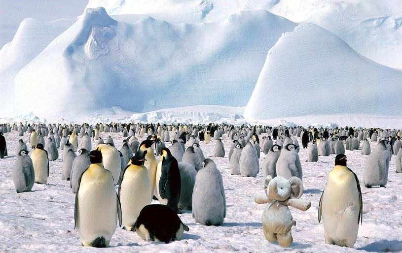 W odwiedzinach u pingwinów /earlyamerican /imgur.com
