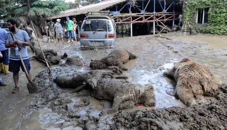 W ogrodzie zoologicznym znaleziono też dwa martwe niedźwiedzie, które utopiły się /AFP
