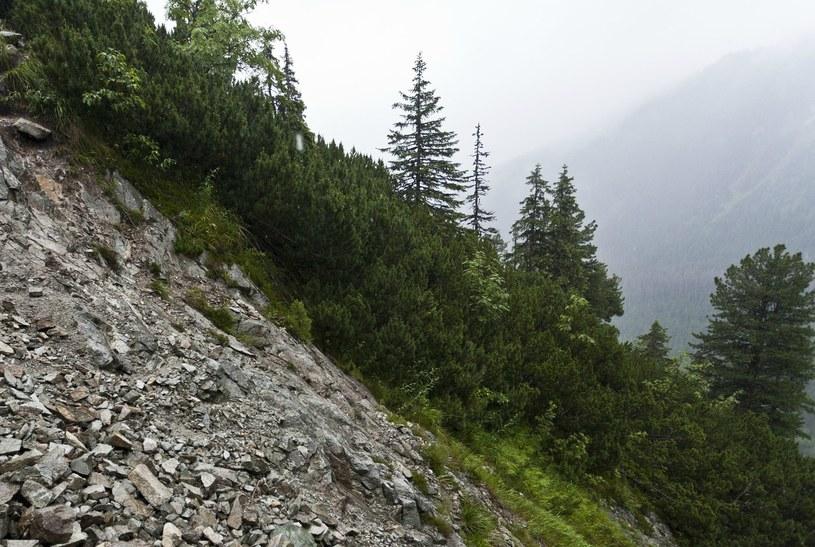 W okolicach Świstówki znaleziono szczątki człowieka (zdj. ilustracyjne) /Fot. Krystian Maj/REPORTER /East News