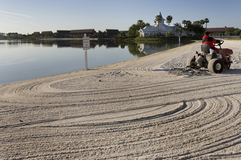 W pobliżu Orlando na Florydzie trwają poszukiwania dwuletniego chłopca, którego wciągnął do wody aligator /Jim Watson / AFP  /AFP