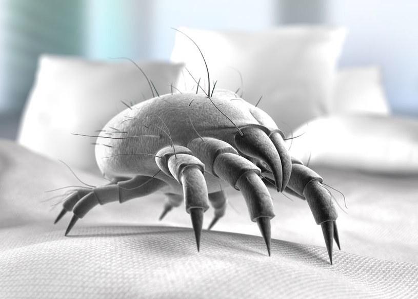 W poduszkach i kołdrach kryją się roztocza /123RF/PICSEL