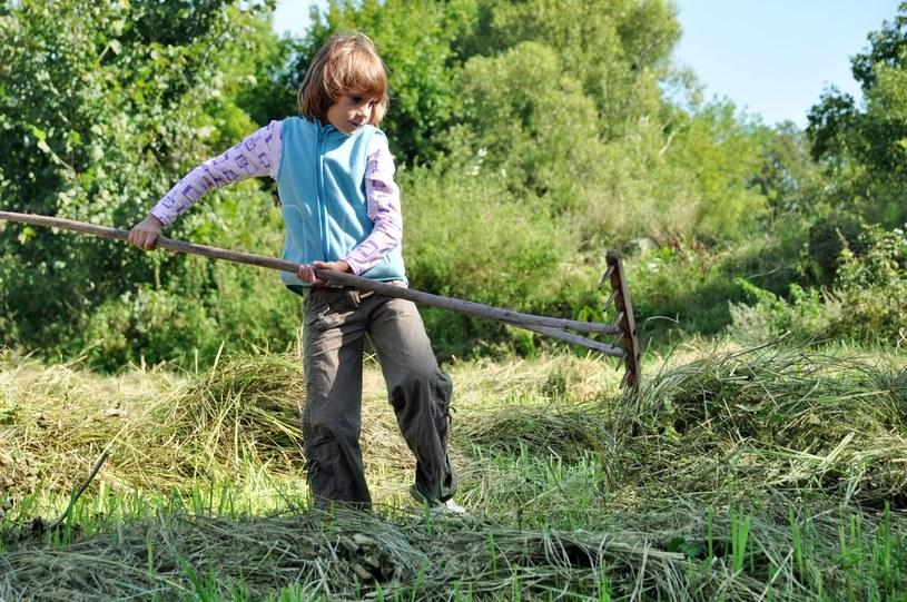 W Polsce dzieci pracują w rolnictwie /123RF/PICSEL