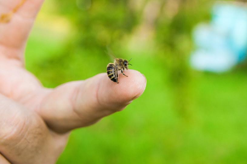 W Polsce uczulenie najczęściej wywołują pszczoły i osy /123RF/PICSEL