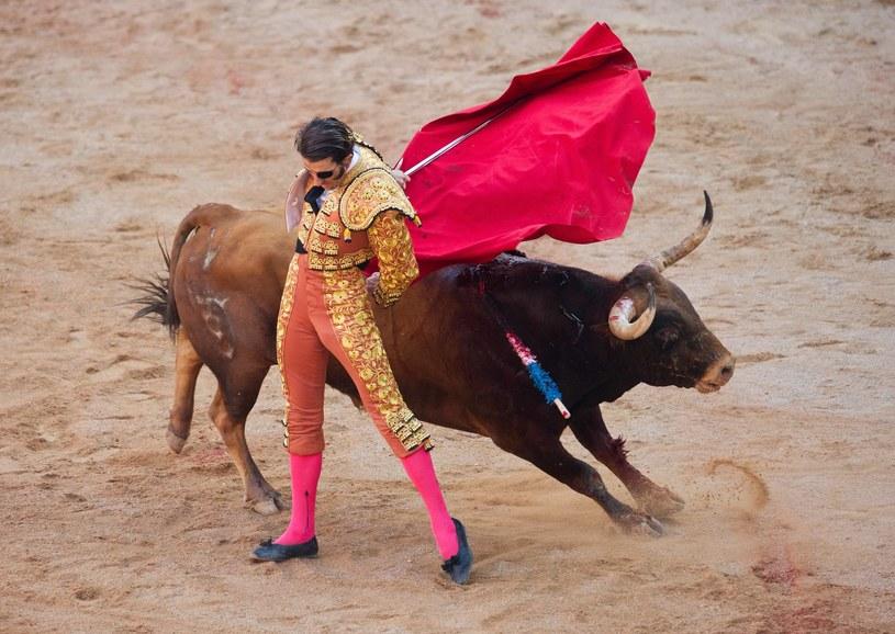 W Portugalii sierpień jest byczym miesiącem /Getty Images/Flash Press Media