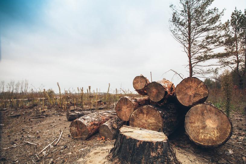 W redukcji emisji gazów cieplarnianych pomogą lasy? /123RF/PICSEL