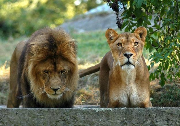 W sumie opisano osiem ogrodów zoologicznych / fot. D. Lewandowski /East News