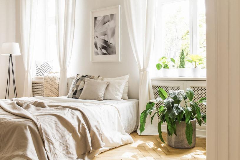 W sypialni nie powinniśmy mieć zbyt wielu roślin /123RF/PICSEL