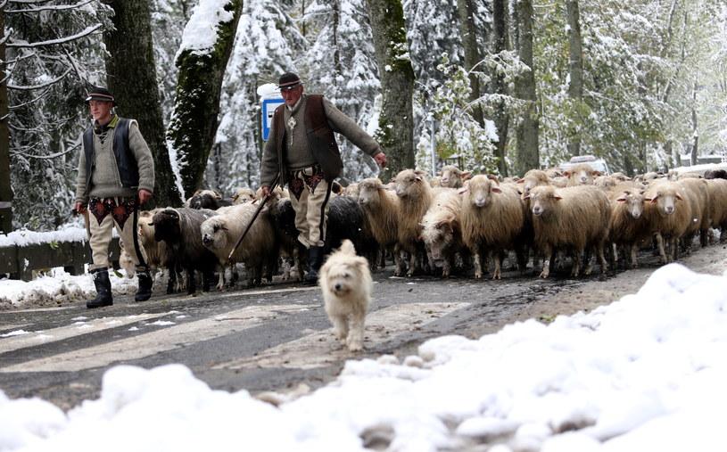 W Tatrach zima /Grzegorz Momot /PAP
