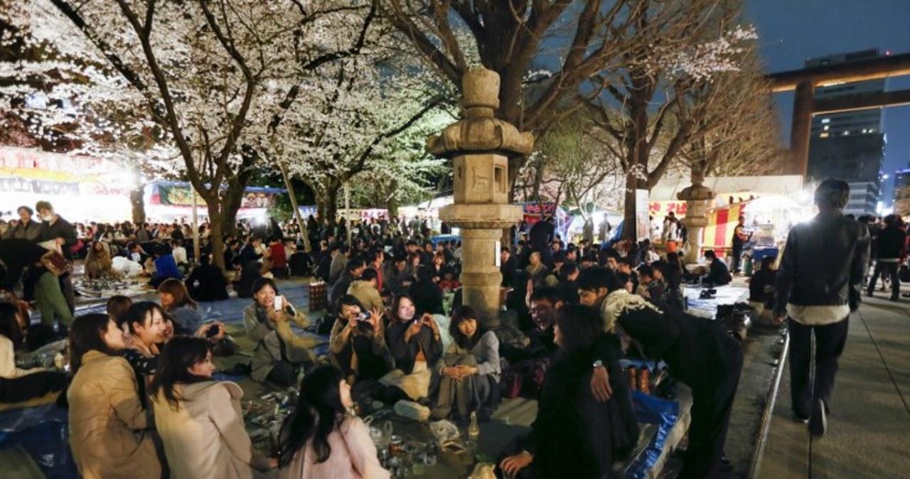 W Tokio zakwitły już wiśnie
