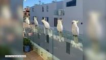 W tych trudnych czasach nawet papugi starają się zachować dystans